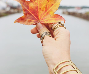 autumn, fall, and rings image