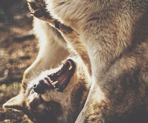 wolf and nature image