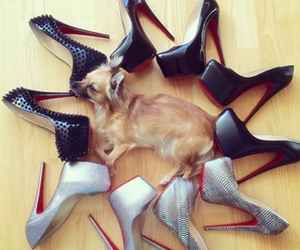 dog, funny, and shoes image