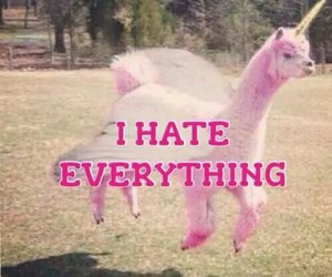 everything, hate, and lama image