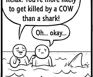 funny, cow, and shark image