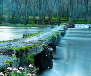 bridge, water, and forest image