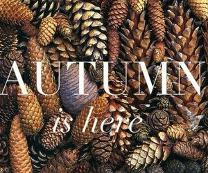 autumn, fall, and brown image