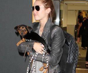 2012, bun, and dog image