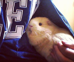 puppy, guineapig, and clea image