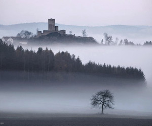 castle, florest, and gloomy image