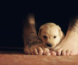 dog, cute, and tattoo image