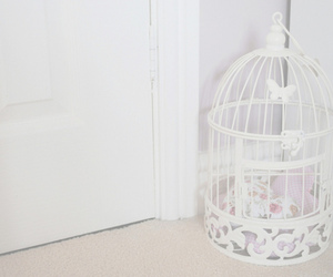 white and birdcage image