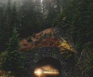 nature, tunnel, and forest image