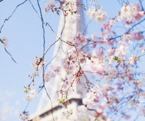 blossoms, blue sky, and daylight image
