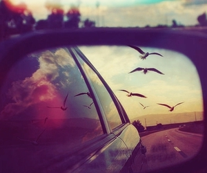 birds, car, and photography image