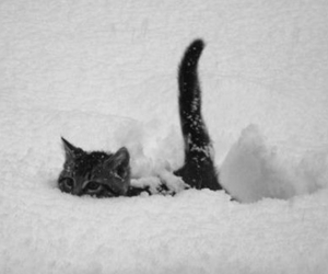 cat, cold, and snow image