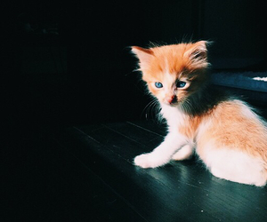 kitten, youtube, and instagram image