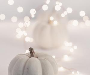pumpkin, white, and light image
