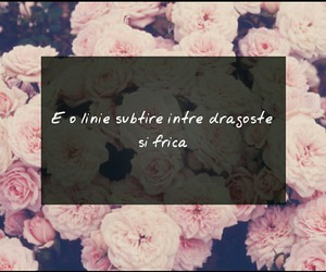 deja vu, roz, and flori image