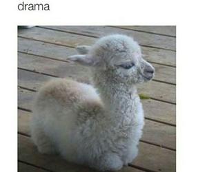 funny, drama, and llama image