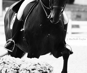 dressage, friendship, and horse image