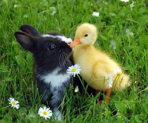 bunny, duck, and animal image