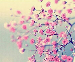 flowers, pink, and love it image