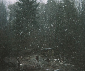 nature, snow, and forest image