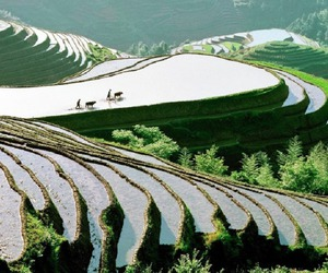 agriculture, china, and asia image