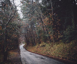forest, photography, and road image