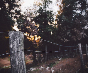 Fences, photography, and forest image