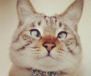 cats, kawaii, and pets image