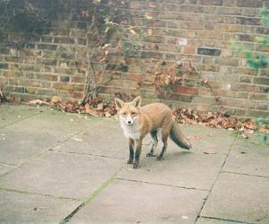 fox, animal, and vintage image