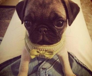 baby, beautifull, and pug image