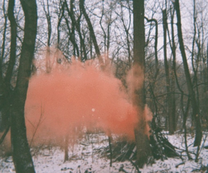 forest, smoke, and tree image