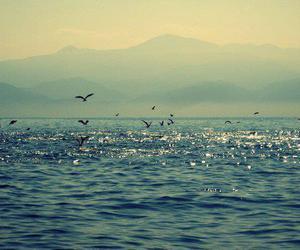 bird, sea, and blue image