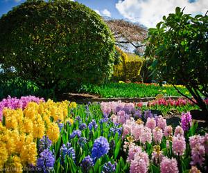 amazing, beautiful, and garden image