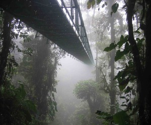 nature, bridge, and plants image