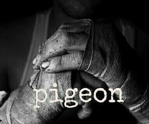 beautiful disaster, pigeon, and travis image