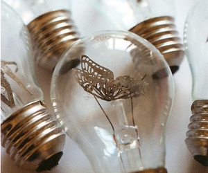 bulb and butterfly image