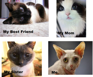 cats, funny, and me image
