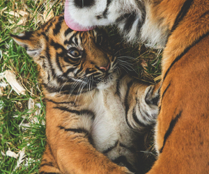 baby, mom, and tiger image