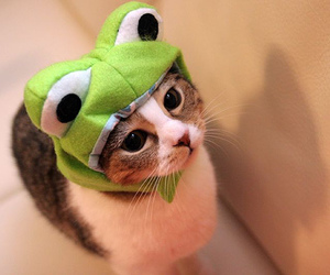 costume, frog, and kitten image