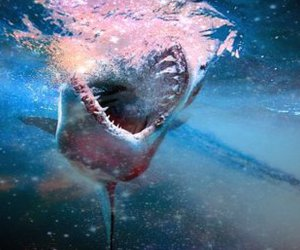 blood, ocean, and shark image