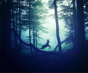 animals, inspiration, and nature image