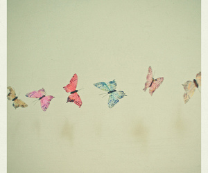 butterfly and colorful image