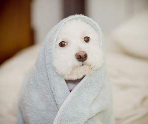 dog, cute, and cozy image