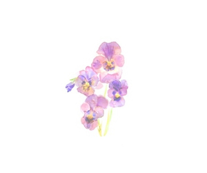 overlay, transparent, and purple image