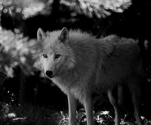 animals, b&w, and black and white image