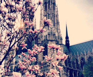 flowers, beautiful, and church image