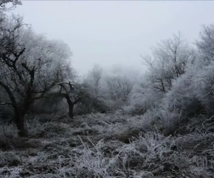 nature, photography, and snow image