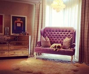 luxury, dog, and room image