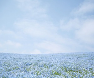 beautiful, blue, and blue flowers image