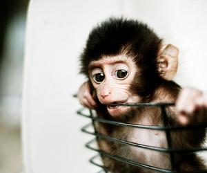 monkey, cute, and animal image